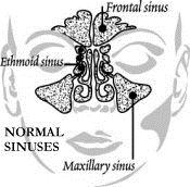 Normal-Sinuses